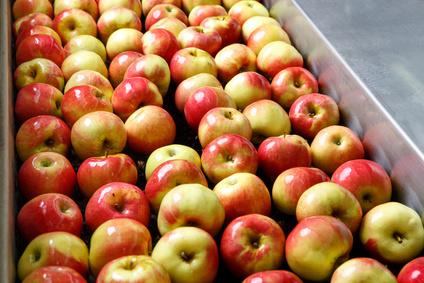 KOWR: mimo pandemii wzrósł eksport żywności...