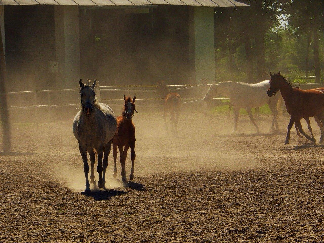 Zdrowie konia – jak zadbać o żywienie, cz. 1...