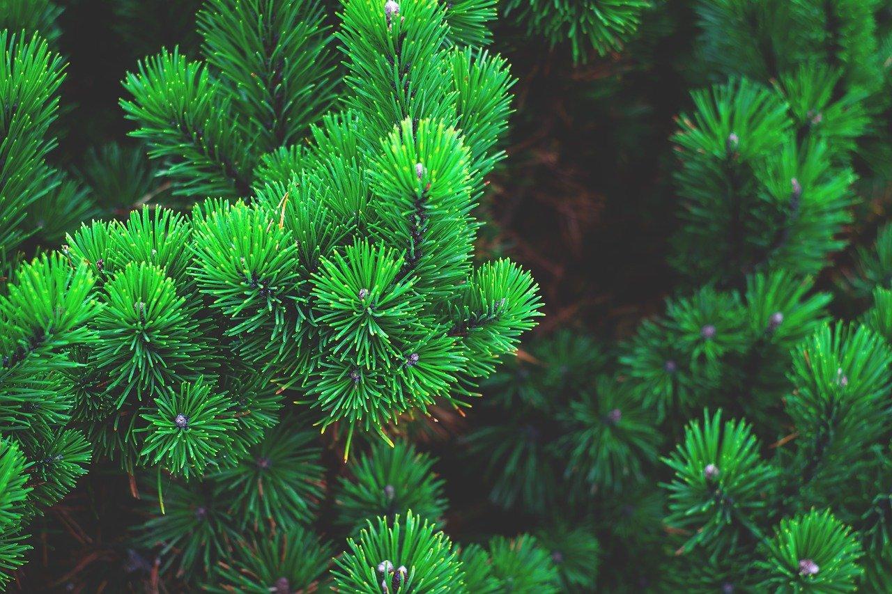 Wsparcie dla właścicieli lasów prywatnych...