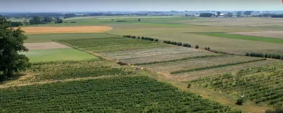 Zdrowe gleby – nowa strategia UE na rzecz ochrony gleb...