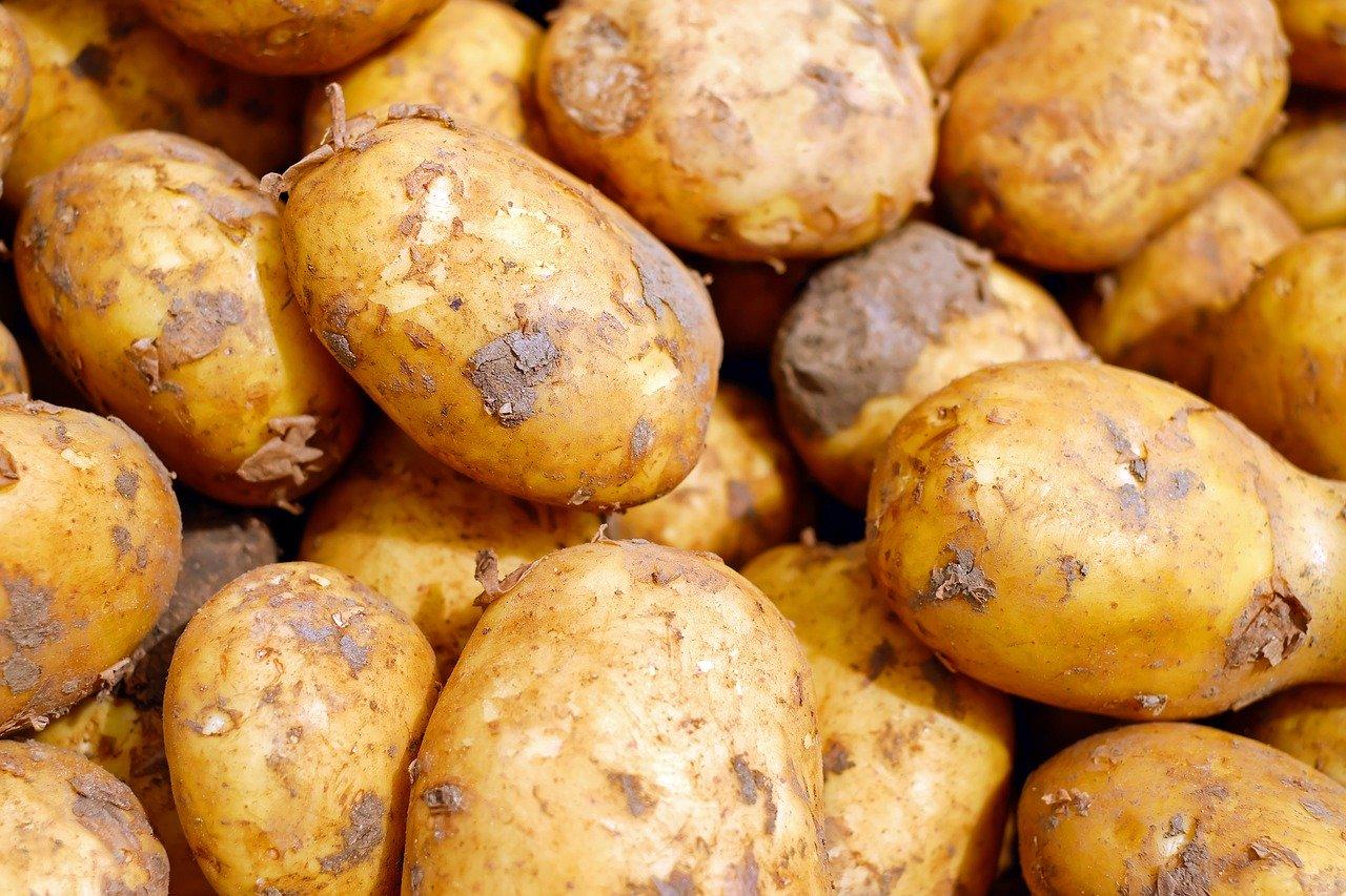 Ochrona ziemniaka na polu – zobacz film i dowiedz się w...