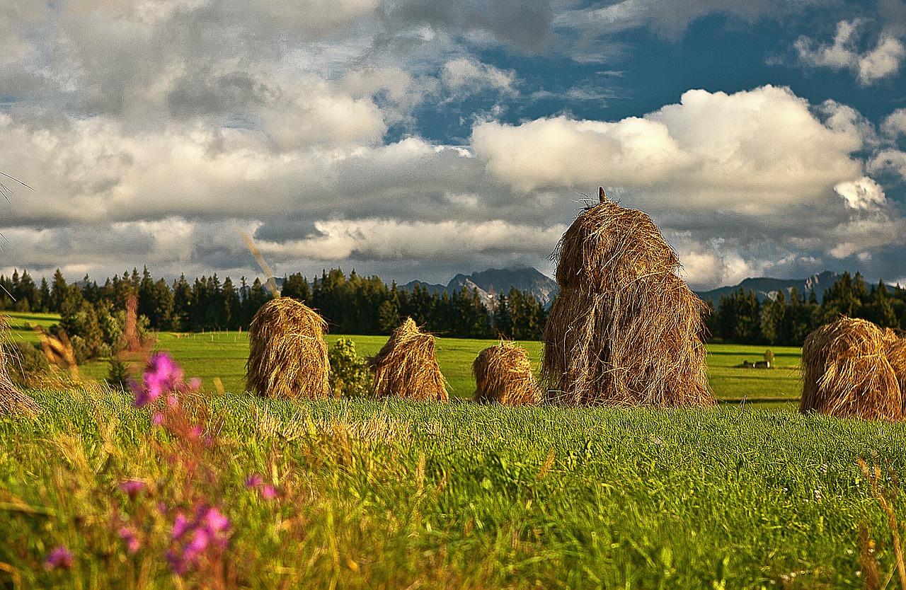 Mamy wydajne rolnictwo...