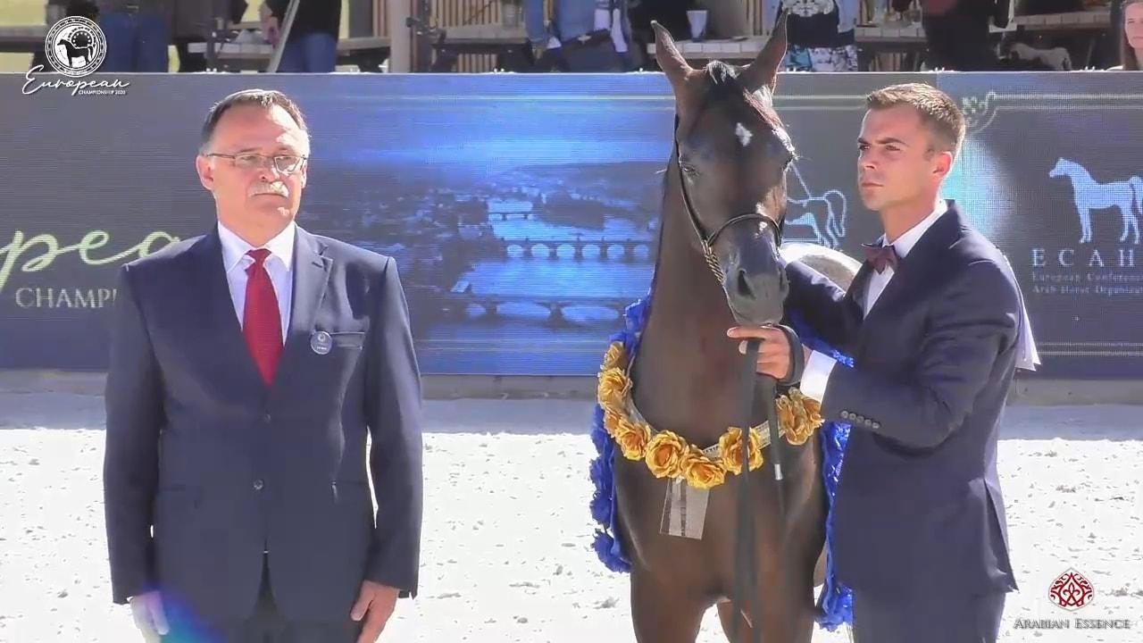 Europejski Championat Koni Arabskich - 12 medali dla ko...
