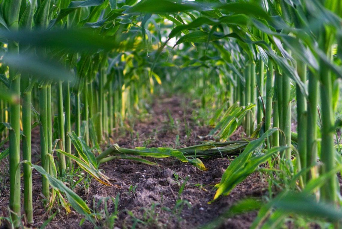 Fundusze unijne na rzecz nowych technologii w rolnictwi...