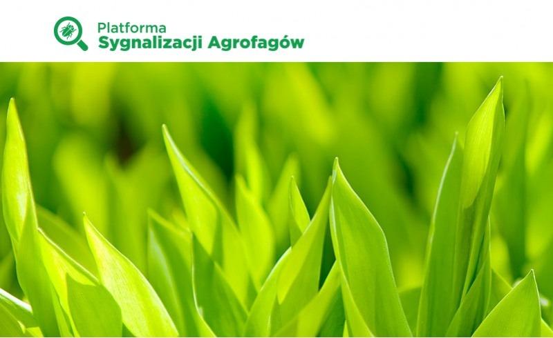 Platforma Sygnalizacji Agrofagów – wsparcie dla doradcó...