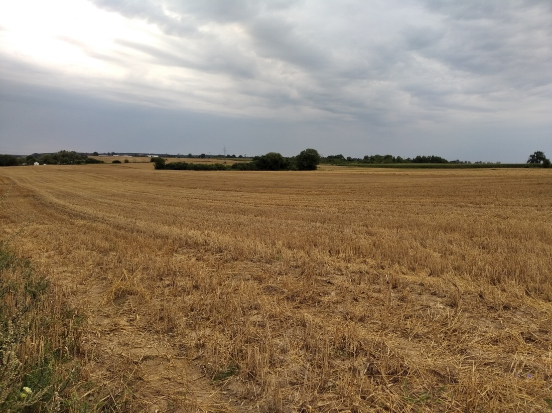 Wójt potwierdza zawarcie umowy dzierżawy gruntów rolnyc...