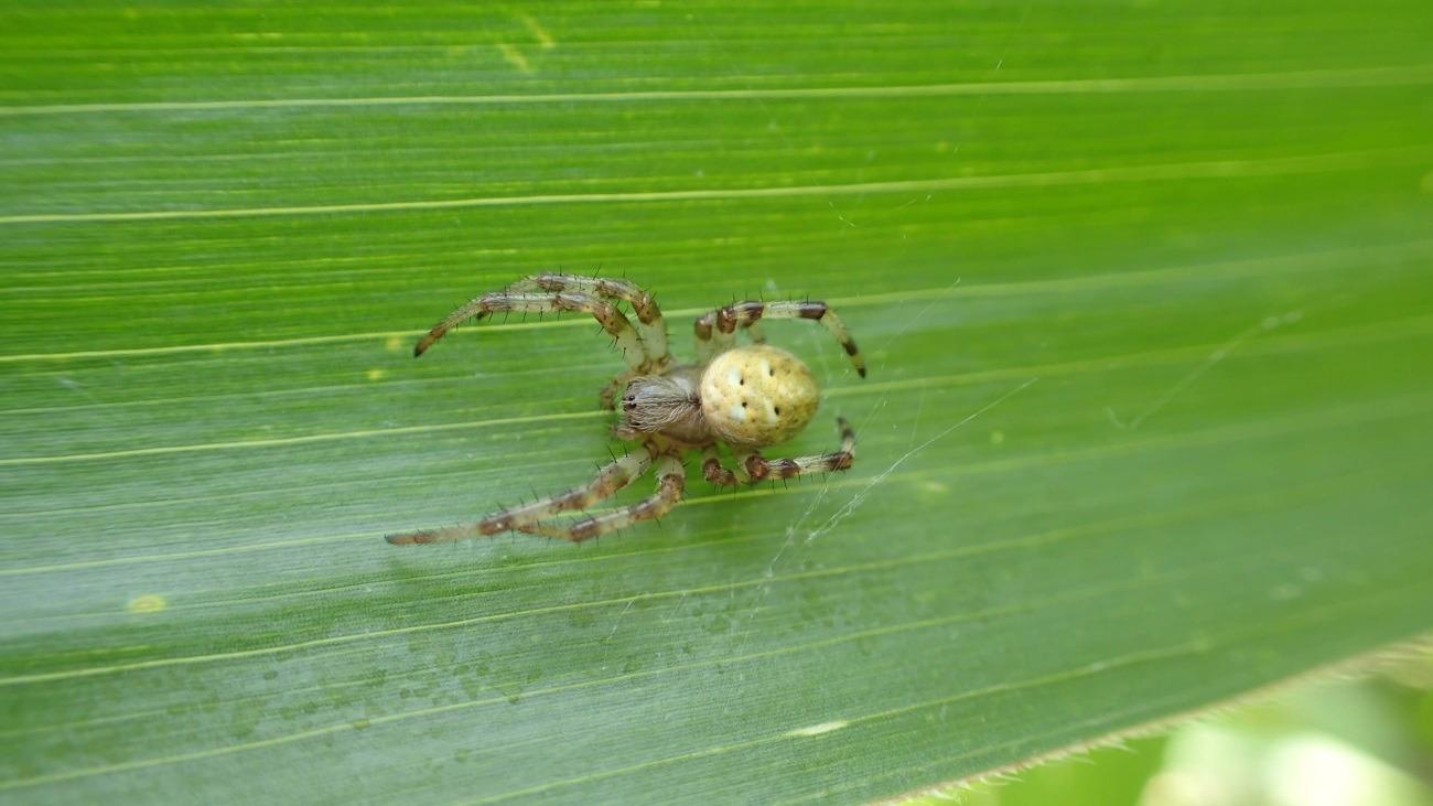 Organizmy pożyteczne w walce ze szkodnikami upraw...