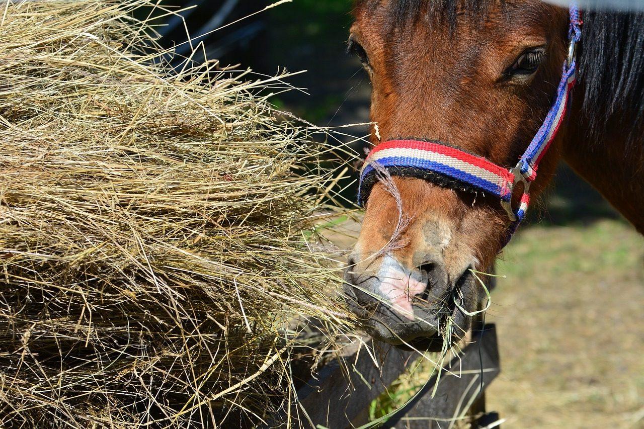 Concordia ubezpiecza konie zimnokrwiste i w typie pogru...