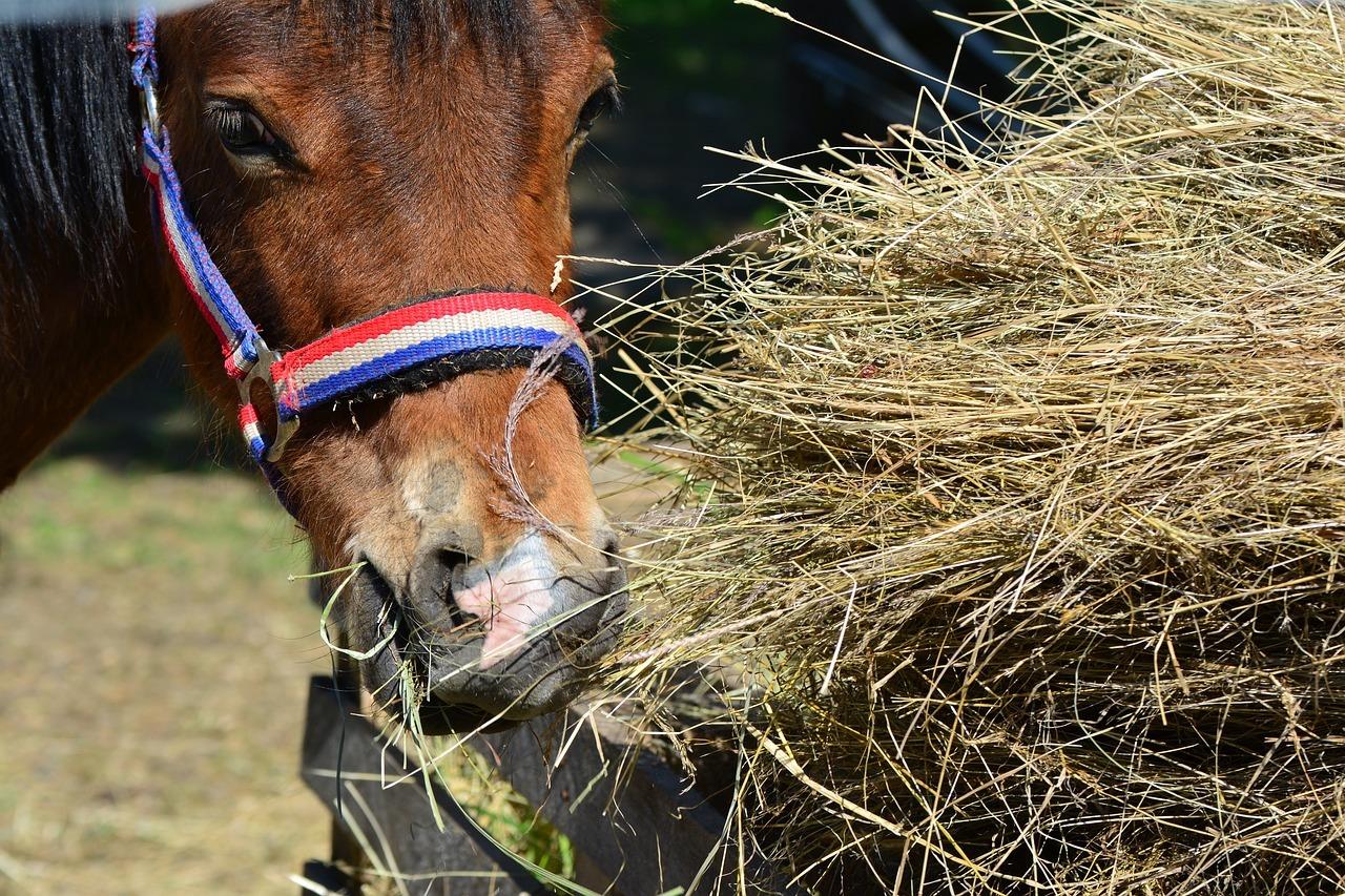 Zdrowie konia – jak zadbać o żywienie, cz. 2 Pasze...
