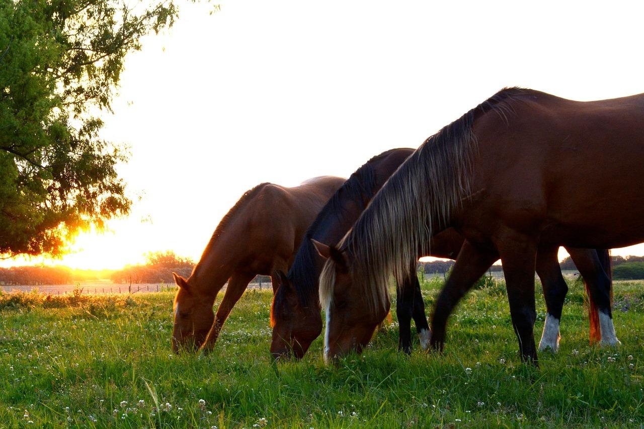Zdrowie konia – jak zadbać o żywienie, cz. 3. Analiza w...