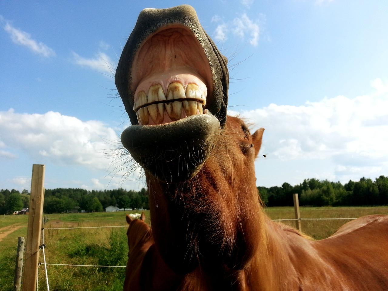 Jeśli chcesz wiedzieć, ile koń ma lat – obejrzyj jego z...