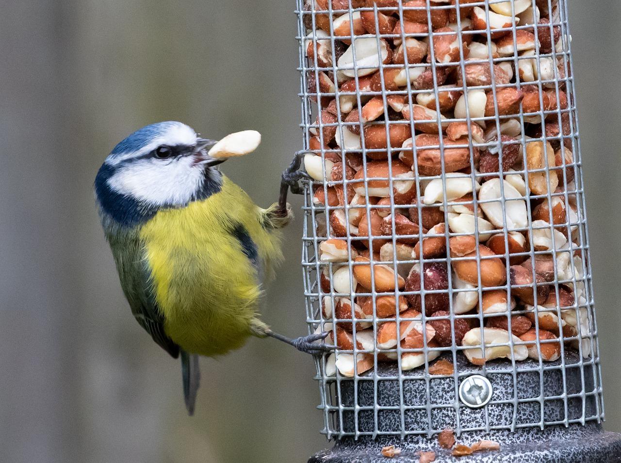 Jak dokarmiać ptaki zimą, żeby nie zrobić im krzywdy...
