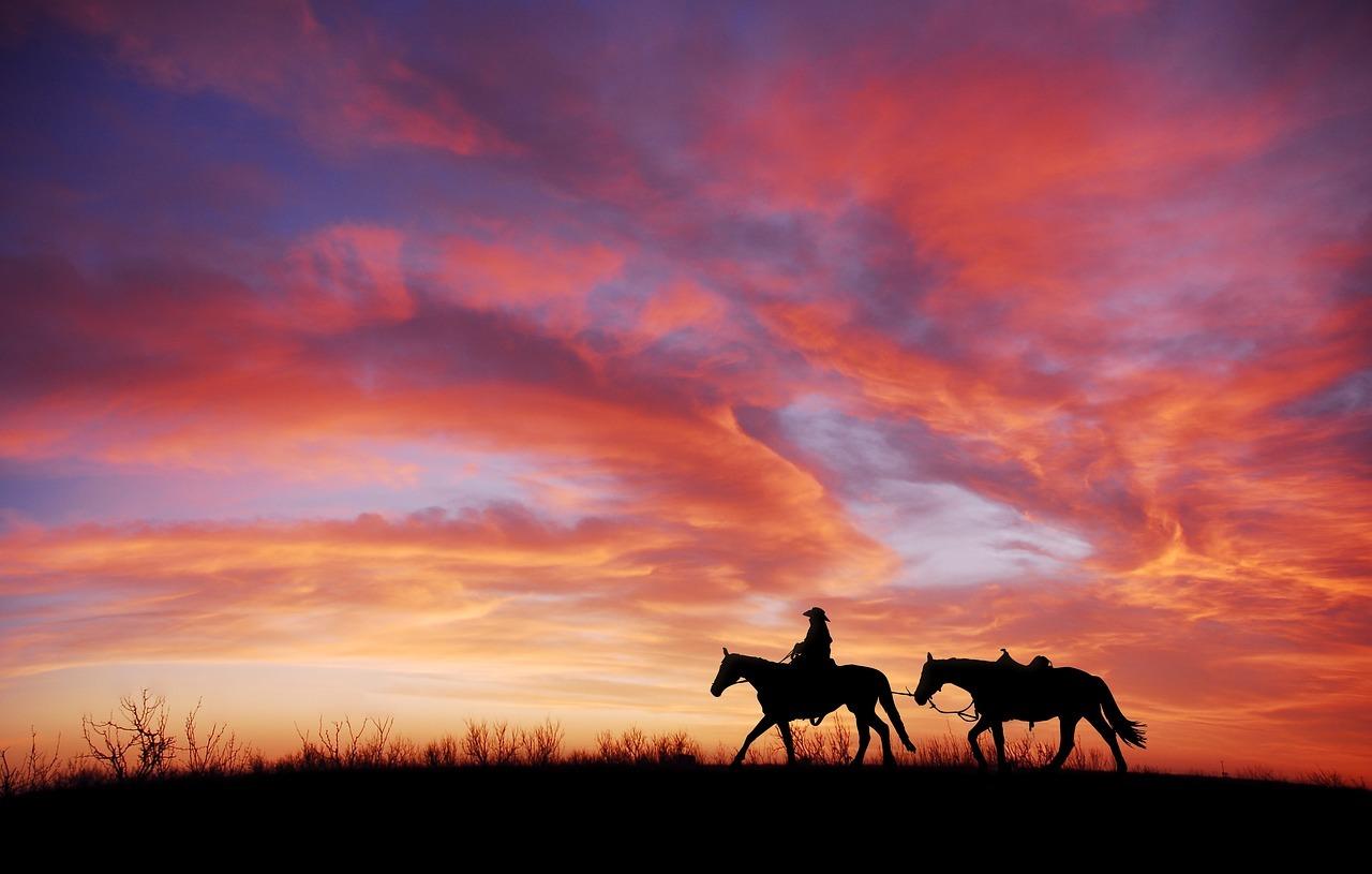 Paszport dla konia – czym jest i skąd go wziąć?...