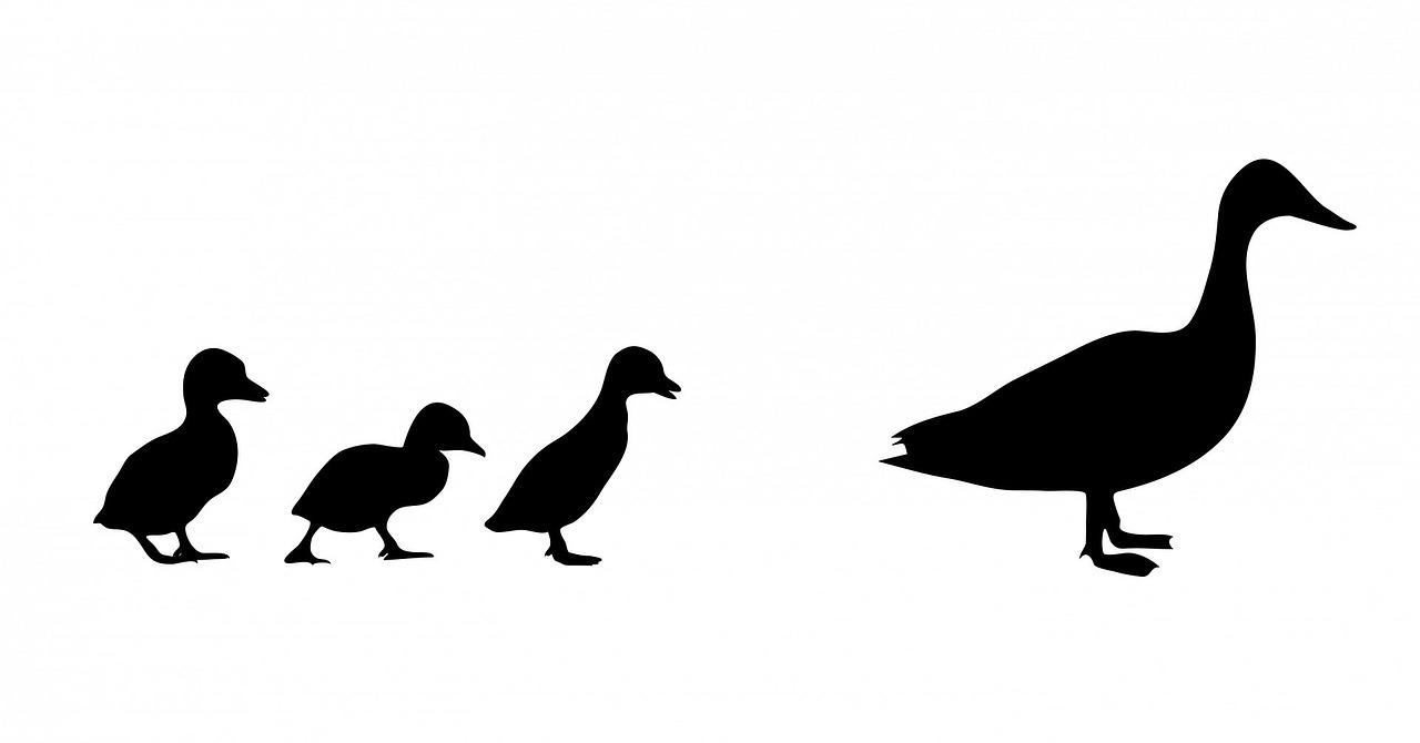 Ptasia grypa – likwidacja ogniska grypy ptaków. Ubezpie...