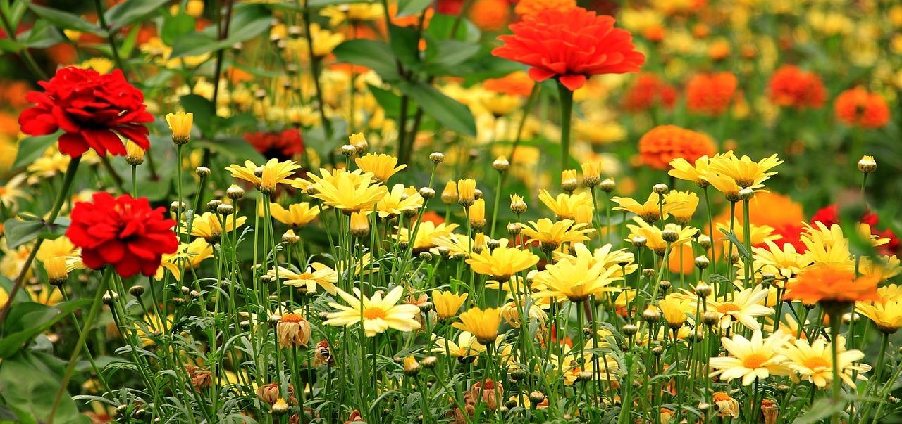 Załóż łąkę kwietną i chroń różnorodność biologiczną...