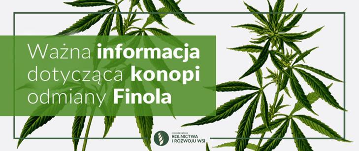 Ważna informacja dotycząca konopi odmiany Finola...